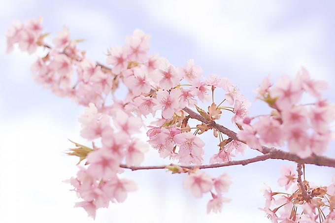 春期講習の特別個別指導